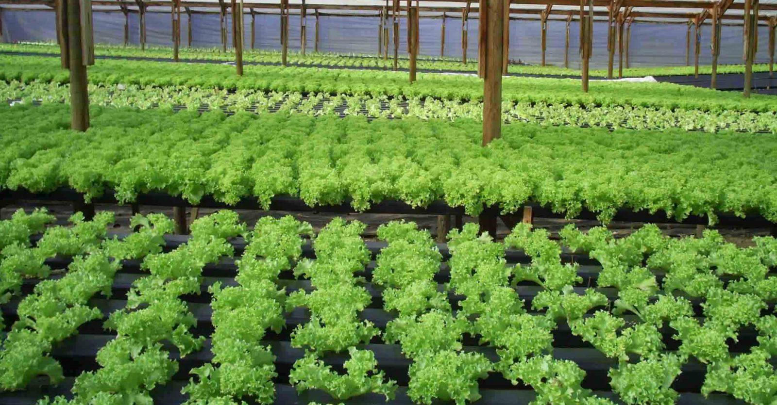 Que Es El Cultivo Hidroponico - Cultivo-hidroponicos